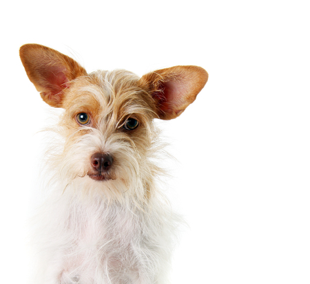 breed: Mixed breed, part terrier rescue dog.