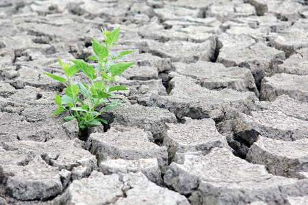 arid climate: Drought cracked river bed. Climate change concept.  Stock Photo