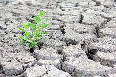 La sequía agrietó el lecho del río. Concepto de cambio climático. Foto de archivo