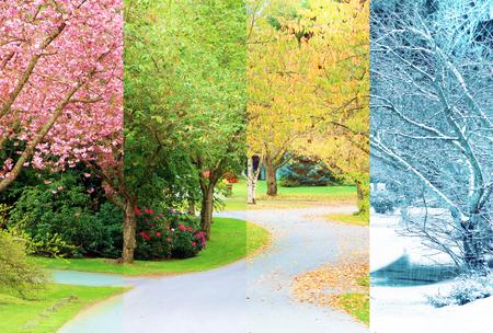Eine von Bäumen gesäumte Straße, die zu allen vier Jahreszeiten vom selben Ort aus fotografiert wurde. Äste in den Bäumen sind perfekt ausgerichtet. Frühling Sommer Herbst Winter.