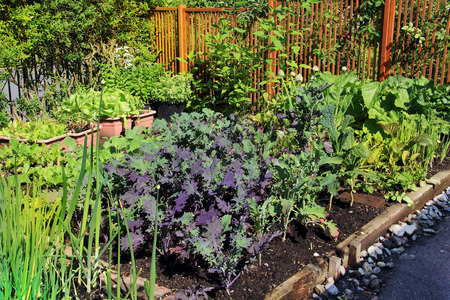 Gemeenschappelijk moestuinperceel met biologische sla, groene uien, bonen, wortels en boerenkool.