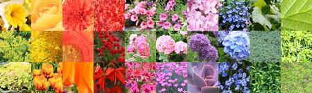 Collage de nuancier composite d'une grande variété de fleurs et de plantes. Banque d'images - 95450074