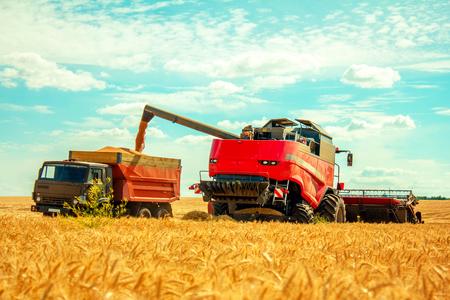 grain harvester on wheat field pouring grain into the truck Reklamní fotografie