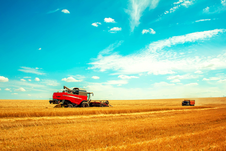 grain harvester on wheat field and truck Stock Photo