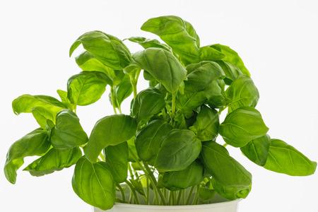 Basil leaves on white 写真素材 - 122112914