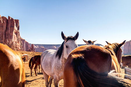 Horses in Pen in Monument Valley Navajo Tribal Park, Camel Butte Rock in Background