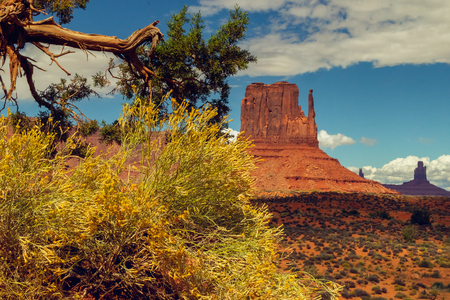 Monument Valley Trip. Landscape with an Old Tree and Beautiful Red Roks