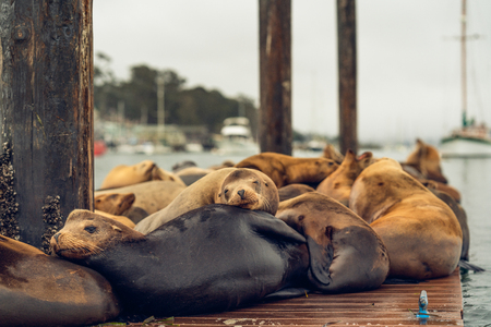 Seal Colony at Morro Bay, California