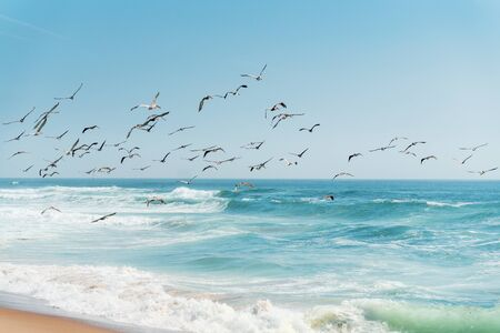 Beautiful Seascape in Blue and Turquoise Colors. Flock of Flying Pelicans over the Sea. Banco de Imagens