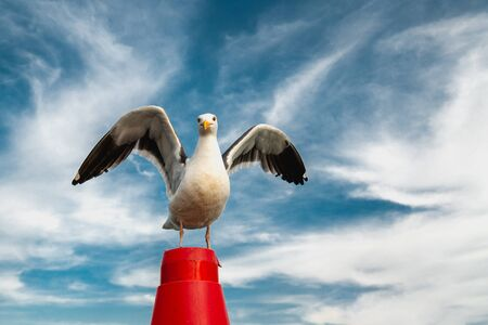 Portrait of Seagull With Its Wings Open, Cloudy Blue Sky Background, Copy Space, Freedom Concept Banco de Imagens