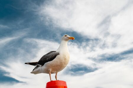 Portrait of Seagull Against Beautiful Dramatic Cloudy Sky. Freedom Concept, Copy Space Banco de Imagens