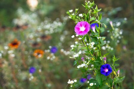 Wildflowers in Bloom, Beautiful Soft Floral Background in Morning Sunshine