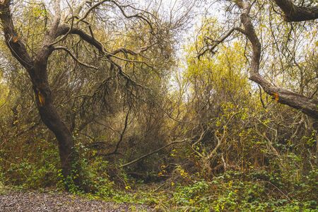 Native forest. Oso Flaco Lake Natural Area State Park, California