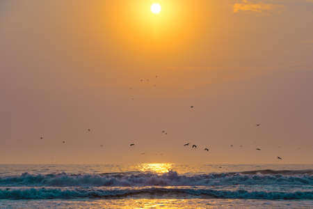 Sunset over the sea and flying birds. Beautiful scenic seascape, tropical beach background