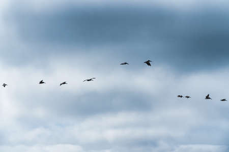 Cloudy sky and silhouettes of flying birds
