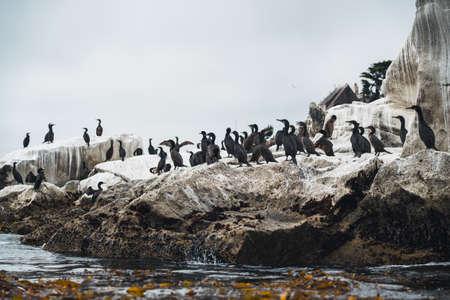 Rock in the ocean and flock of cormorants Zdjęcie Seryjne