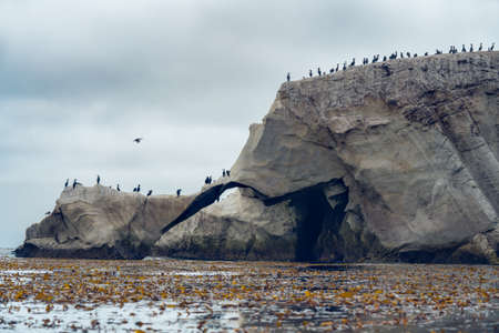Rocky cliffs and flock of cormorants and pelicans, Shell Beach California