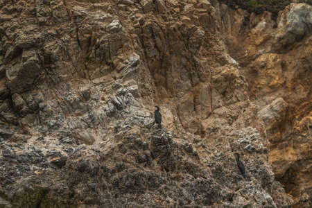 Rocky cliff and cormorants