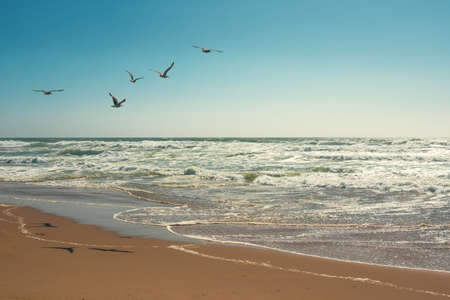 Flock of seagulls flying over the sea, clear blue sky on background