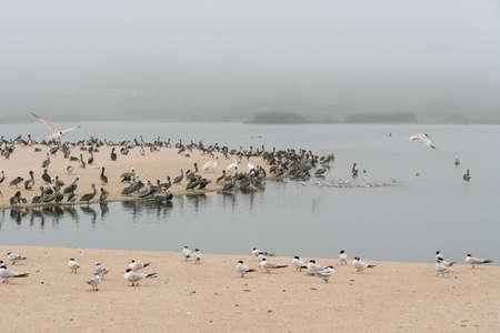 Sand dunes on the beach and colony of seabirds, California Zdjęcie Seryjne