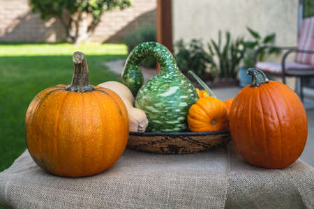 Pumpkins and squash close up on rustic background in the backyard, decoration for Halloween or Thanksgiving