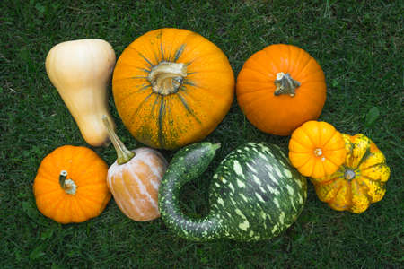 Many different pumpkins and squash close up on the grass in the ground, directly from above