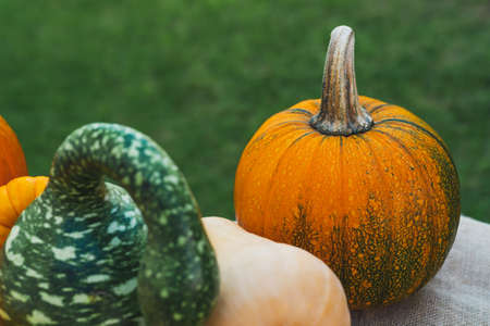Pumpkin and squash close up in natural background Stock Photo