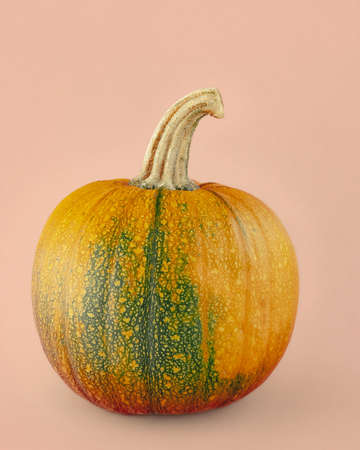 Kakai pumpkin close up isolated on light pink-beige background. Pumpkins and  gourds family varieties