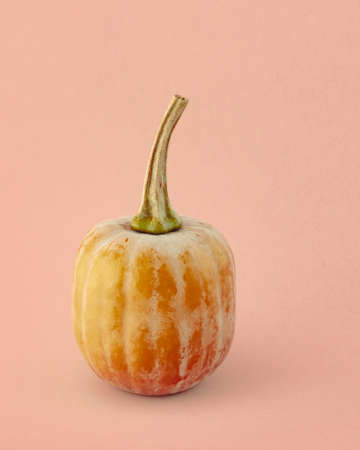 Honeynut squash close up isolated on light pink-beige  background. Gourd family varieties