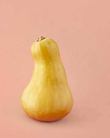 Butternut squash close up isolated on light pink-beige color background. Gourd family varieties