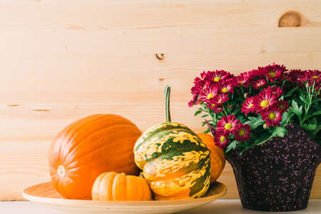 Autumn collection with pumpkins, squash and pretty flowers, close up view, wooden background with copy space