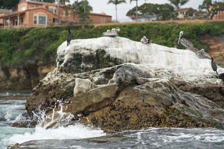 Shell Beach, California, view from the ocean. Cliffs, kelp forest, flock of birds, and seal