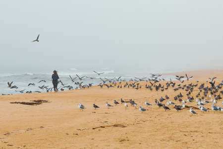 Flock of birds on the beach and silhouette of woman. Scenic seascape, foggy overcast day