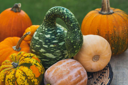 Different pumpkins and squash close up on rustic background outdoor Stock Photo