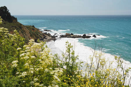 Big Sur, Monterey County, California. Pacific Ocean, cliffs, and native plants on the beach. Stock Photo