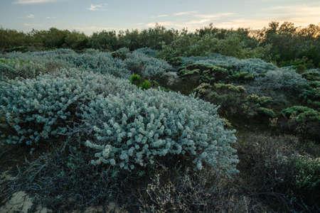 Walk through several diverse natural habitats for viewing flora and fauna in Oso Flaco Lake Natural area, California