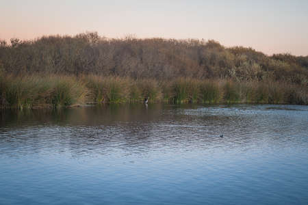Oso Flaco Lake at sunset, and birds. Oso Flaco is a freshwater lake, and it is a refuge for local and migrating birds