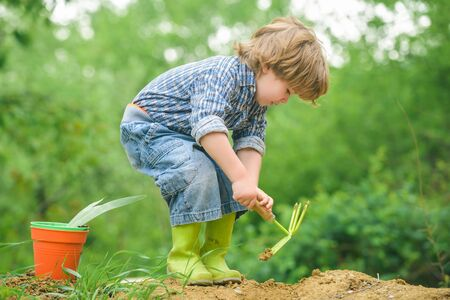 Autumn work. Boy with a shovel, gardening. Digging land for harvest. Garden concept. Cute child and nature. Stok Fotoğraf