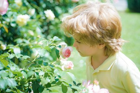 Child and flower. The aroma. The boy sniffs a rose. Bush of roses. Home garden. Children and nature. Spring blossom. Stockfoto