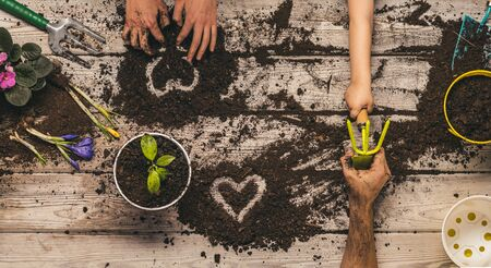 Love and heart. Love of nature. The family plants plants together in pots. Home garden. Family Business. Father, son and mother painted hearts in the ground.