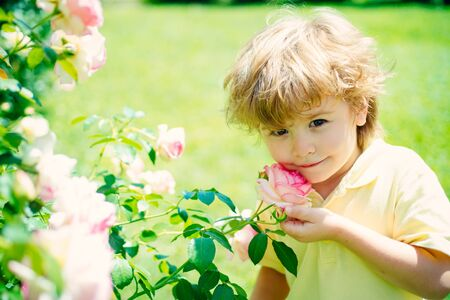 Spring time. Cute boy and rose in the garden. Delicate scent. Spring weather. Happy childhood. Home garden with roses.