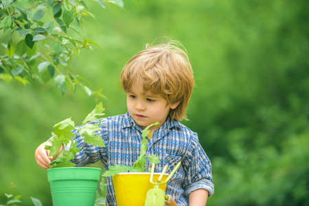 Kid and home garden plants. Green nature on spring and children. 免版税图像