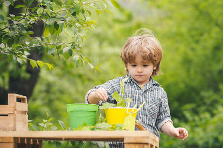 Child with plants. Care of plantings. Green background. 免版税图像