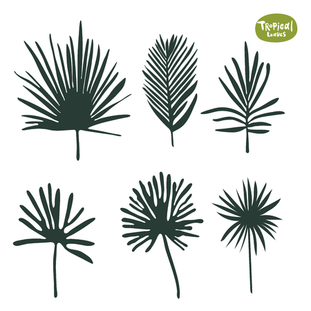 Tropical doodle Palm tree and ficus leaves collection. Set of vector isolated silhouettes on white background