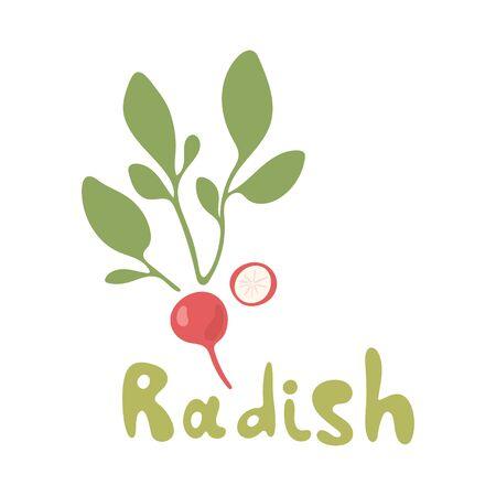Radish flat design icon isolated on white background. Set of ripe radishes. Vector illustration on white background.