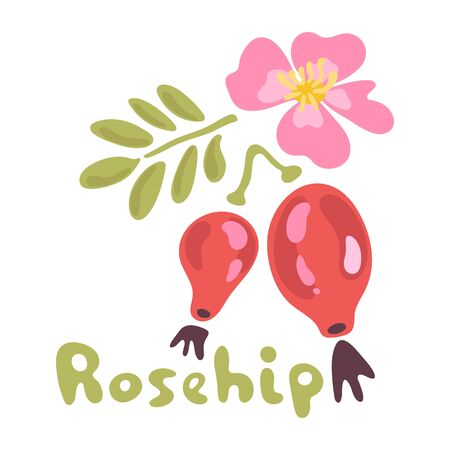 Vector rosehip branch with red berries and pink flower isolated on a white background. Illustration