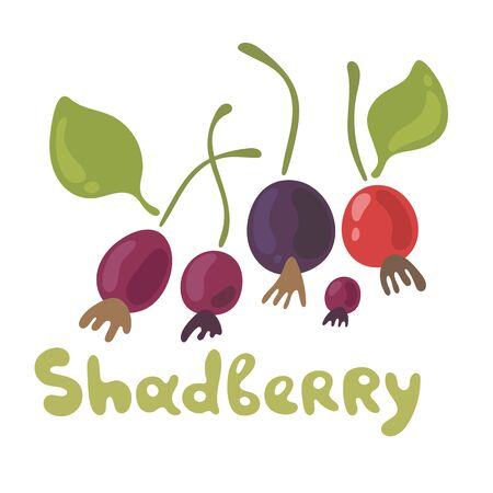 Shadberry hand drawn vector illustration in doodle style. Flat icons for food image. Organic food on white background. Cute plant. Flat doodle design.