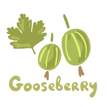 Fresh gooseberry berries or fruits. Organic food gooseberries on white background. Vector hand drawn illustrations. Garden plant. Flat doodle design.
