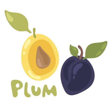 Plum fruit and leaf vector icon. Fresh juicy plum isolated on a white background. Colorful half and whole plum with a leaf. Perfect for juice or jam, cooking book