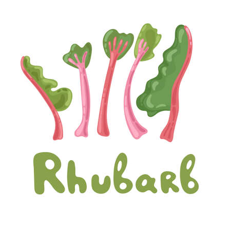 Rhubarb vector set isolated